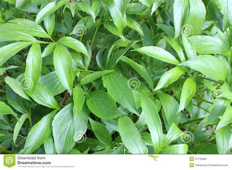 large leaves royalty free stock images image 31745869