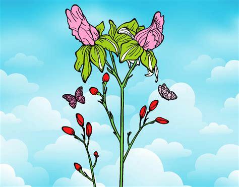 iris fiori disegno fiore di iris colorato da utente non registrato il