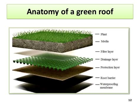 green roof green roofs