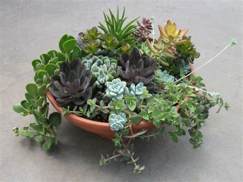 succulents plants succulents the perfect plants for forgetful gardeners