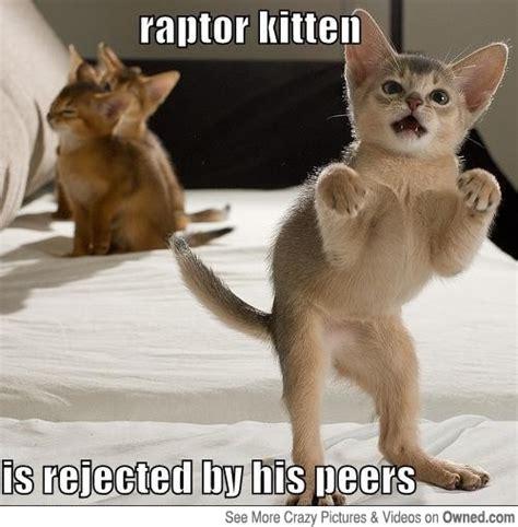 Meme Kitten - raptor kitten cat meme cat planet cat planet