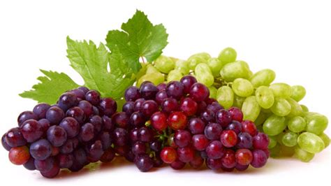imagenes de uvas y frases uva la fruta de la eterna juventud descubre sus