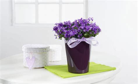 best indoor flowering plants indoor flowering plants archives metropolitan wholesale