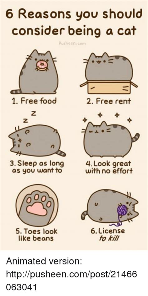 Pusheen Memes - pusheen memes 28 images image 383580 pusheen know your