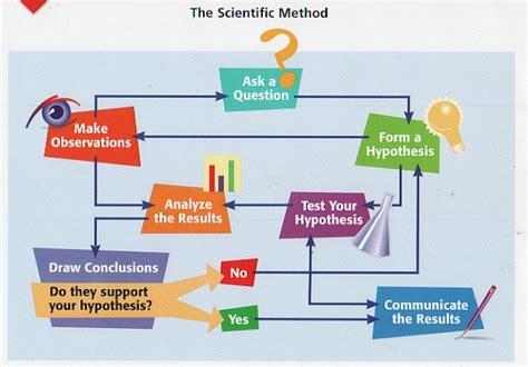 scientific flow chart bio216 assignment evolution and data interpretation