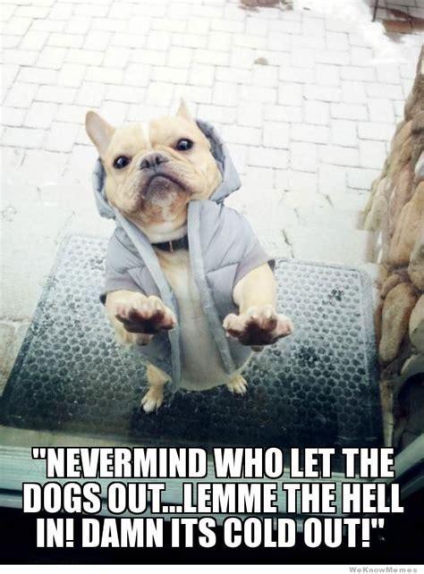 Internet Dog Meme - caption contest winner jacket dog meme facebook com weknowmemes memes pinterest