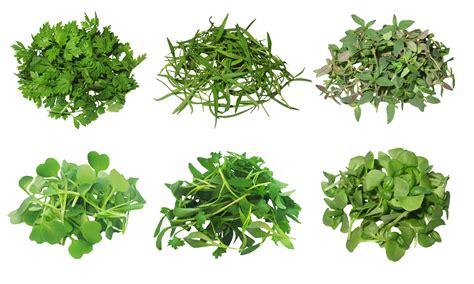 Lse Herba Pelangsing Melanxing Free Green Gel image gallery herb