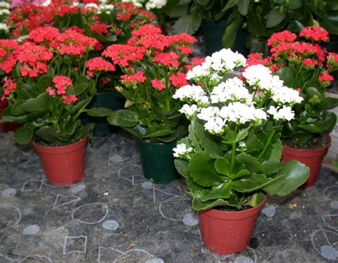 contoh tanaman hias  taman minimalis tanaman hias