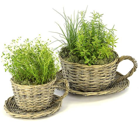 Teacup Planters by Set Of Two Willow Teacup Planters And Herb Garden Kit By