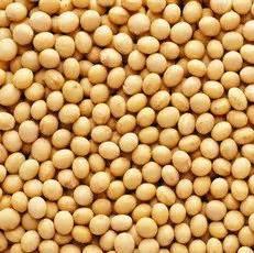 Bungkil Kedelai Lemak kacang kedelai khasiat bagi kesehatan distributor bahan