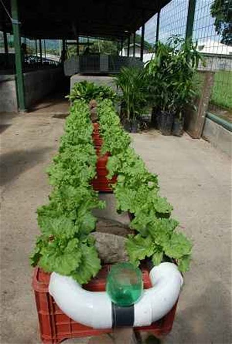 grow vegetables indoors  winter