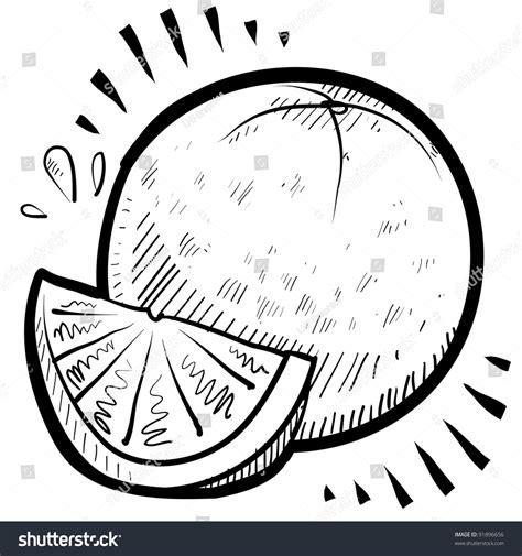 doodle orang doodle style fresh orange illustration stock vector