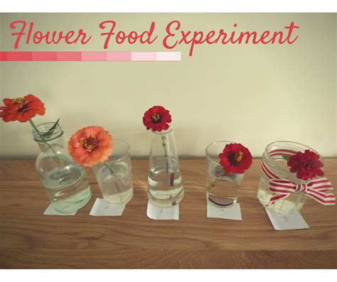 homemade cut flower food homemade flower food experiment