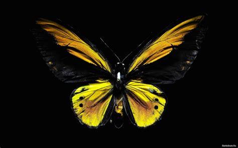 black wallpaper with yellow butterflies black yellow butterfly computer screen saver pc desktop