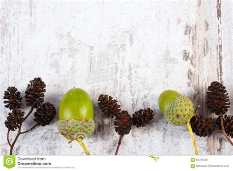 Brown By Dreamcone Soflens brown alder cone and green acorn with copy space for text stock photo image 59751526