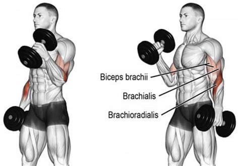 get bigger biceps with this bicep crushing workout
