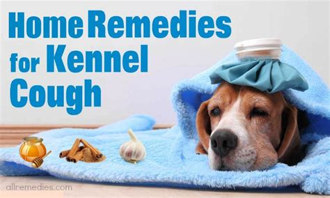 home remedies for dogs 23 useful home remedies for kennel cough in dogs and cats