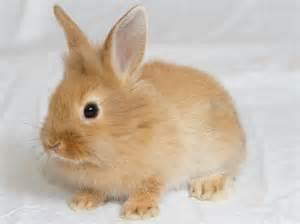 le lapin alimentation mode de vie soins