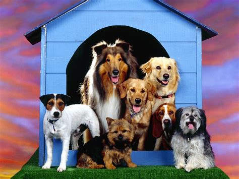 dog house wallpaper dogs family at home wallpapers backgrounds dogs