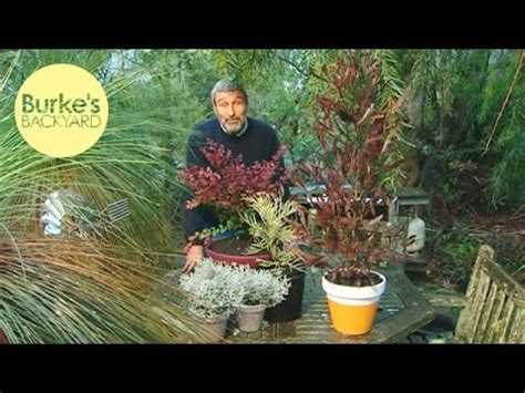 Burke Backyard by Burke S Backyard Colourful Australian Plants