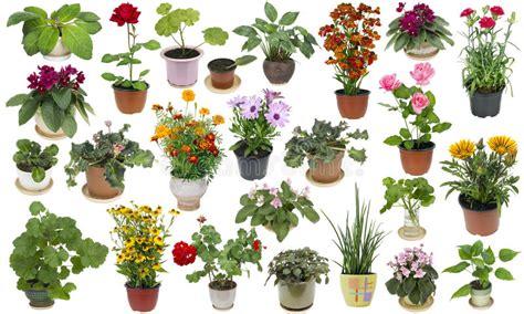 fiori di appartamento piante da appartamento e fiori dell interno messi