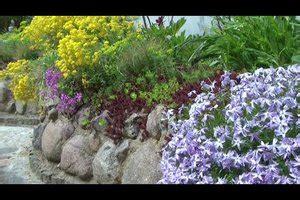 video steinpflanzen richtig einpflanzen anleitung