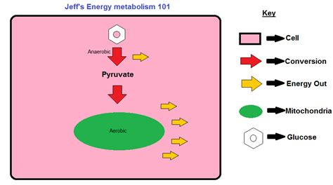 metabolism diagram the age of the treadmill is live hiit