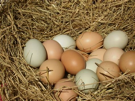 Stool Smells Like Rotten Eggs by Flying Goose Eggs Quot Carved Ostrich Eggs For Sale Outside Smells Like Rotten Eggs Quot