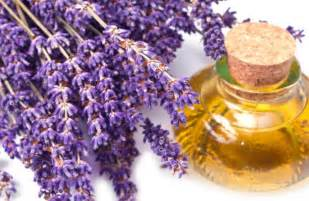 why you should have lavender oil in your home
