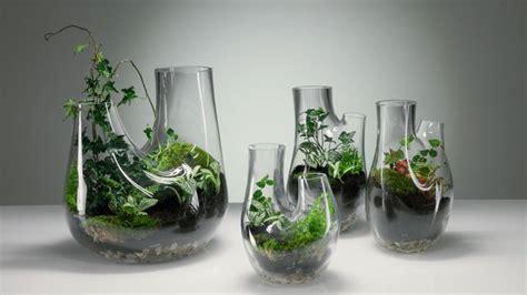 mini garten wie pflanzen im glas gedeihen