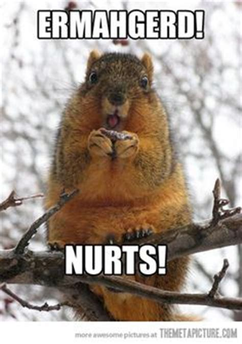 Squirrel Nuts Meme - squirrel probz on pinterest funny squirrel golden