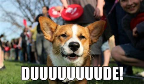 Stoner Dog Meme - 10 funniest stoner dog memes
