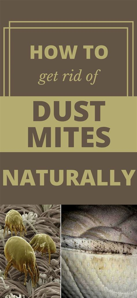 how to get rid of dust mites in bed 1000 best cleaning tips 101 images on pinterest how to