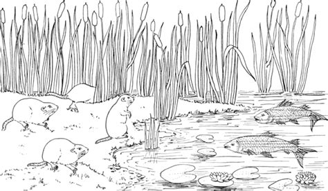 coloring pages of pond animals 12 images of coloring pages of lakes rivers and streams