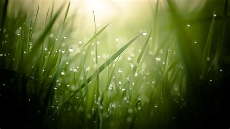 wallpaper grass  hd wallpaper green drops dew sun
