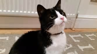 ten reasons to love black and white cats whitburn whiskers