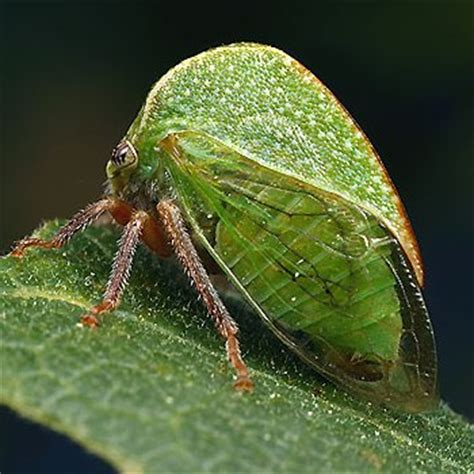 ent 425 | general entomology | resource library