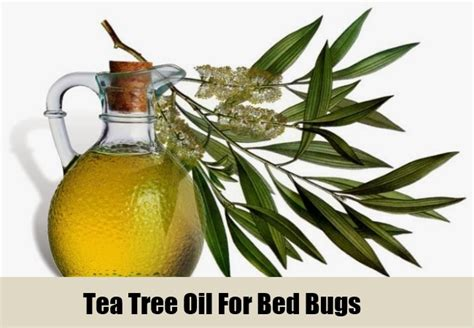 top 5 herbal remedies for bed bugs how to get rid of bed