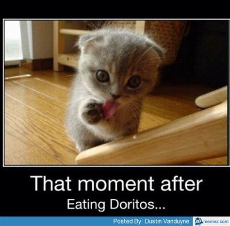 Doritos Meme - after eating doritos memes com