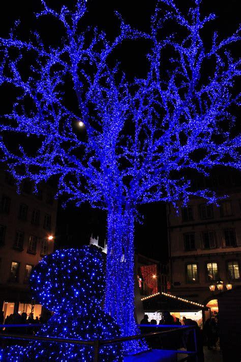 images gratuites branche lumiere nuit fleur bleu eclairage decor arbre de noel