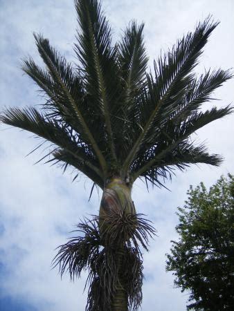 der speisesaal palm island nikau lodge bewertungen fotos preisvergleich kaikoura
