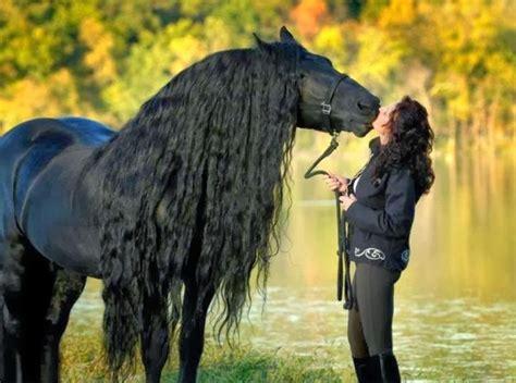 doma de caballos a la seguro caballos
