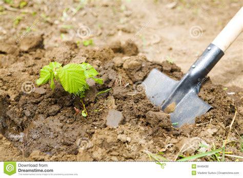 Garden Work by Garden Work Stock Photo Image 8449430
