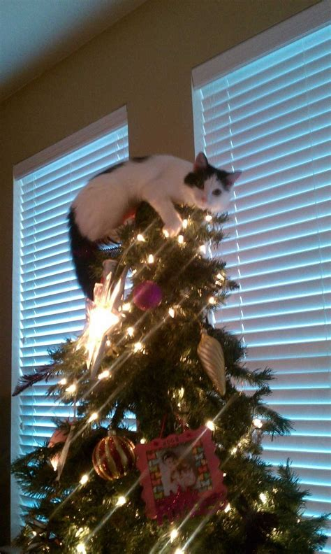 cat christmas tree topper sanjonmotel