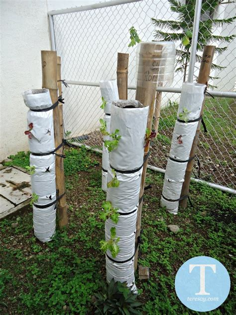 vertical gardening reducing garden footprint through vertical gardening teresay