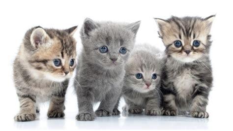 zu kaufen katzen kaufen was sollte beachten