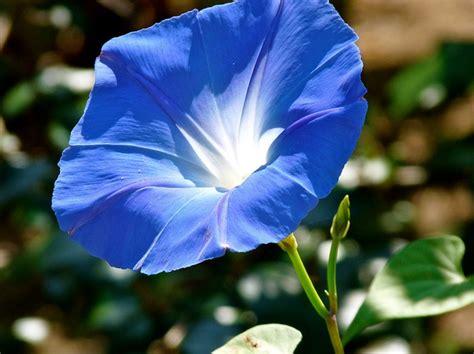 tutorial merajut bunga bagi pemula tips memilih bibit bunga yang cocok bagi pemula