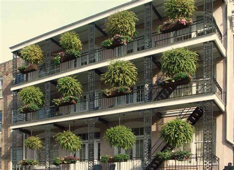 fiori in terrazza siepi da vaso per terrazzo