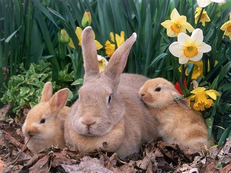 cute bunny rabbit easter wallpapers  desktop