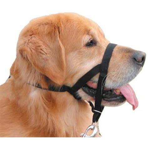halter for dogs collars halter and headcollar collars discount pet collars